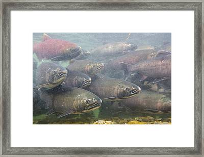 Silvers And Kings Framed Print