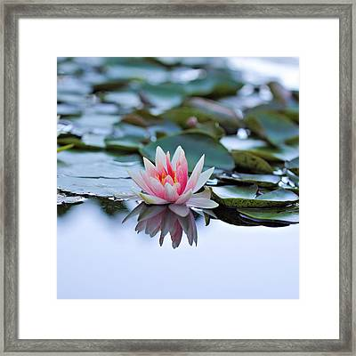 Silvery Framed Print by Katherine White
