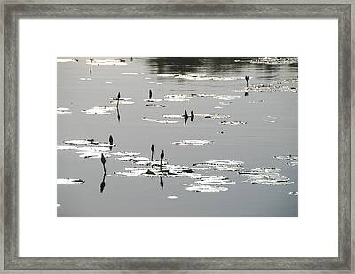Framed Print featuring the photograph Silvery Lotus 2 by Ankya Klay