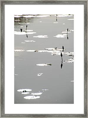 Framed Print featuring the photograph Silvery Lotus by Ankya Klay