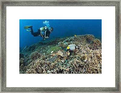 Similan Islands Thailand Scuba Diver Framed Print by Stuart Westmorland
