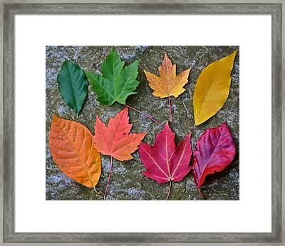 Similar But Different Framed Print by Frozen in Time Fine Art Photography