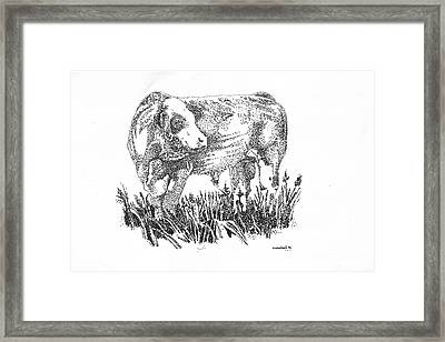 Simmental Bull Framed Print by Larry Campbell
