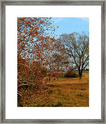Framed Print featuring the photograph Simple Beauty by Candice Trimble