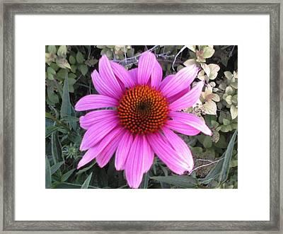 Simple Beauty Framed Print by Kiara Reynolds