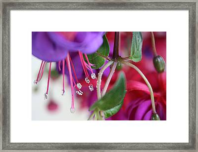 Simple Beauty Framed Print by Maria Schaefers