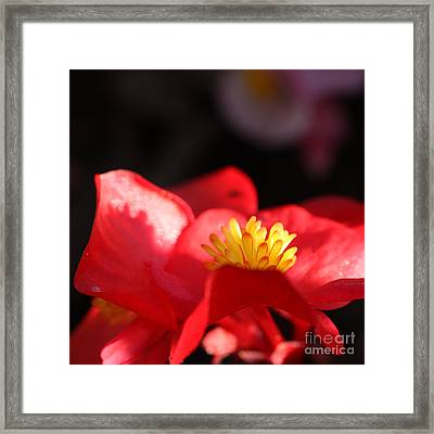 Simple Beauty- Square Framed Print