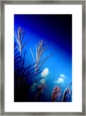 Simple Beauty  Framed Print by Walter  Holland