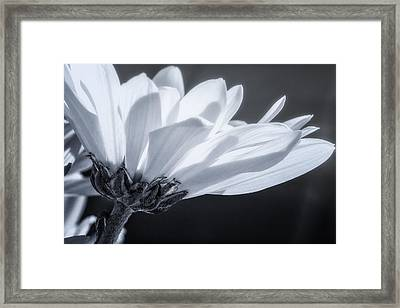 Simple Charm Framed Print by Maria Robinson