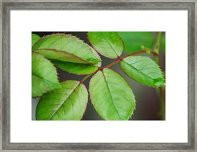 Simple Elegance Framed Print by Frozen in Time Fine Art Photography