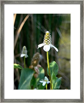 Framed Print featuring the photograph Simple Flower by Laurel Powell