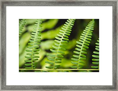 Simple Green Framed Print by Adam Romanowicz