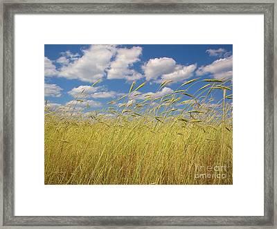 Simple Moments On The Farm Framed Print