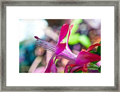 Simple Passion Framed Print