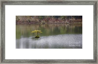 Simple Remedy Framed Print by Carrie Cole