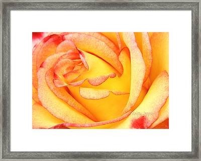 Simple Rose 2 Framed Print
