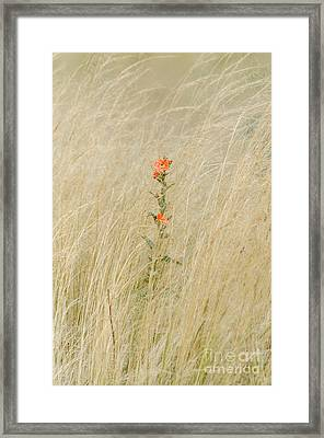 Simple Splash Of Color Framed Print