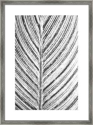 Simple Stripes 2 Framed Print