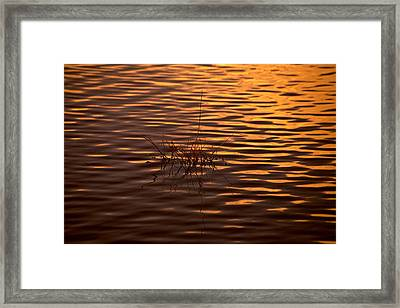 Simple Sunset Framed Print by Bonnie Bruno
