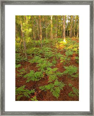 Your Never Alone Framed Print