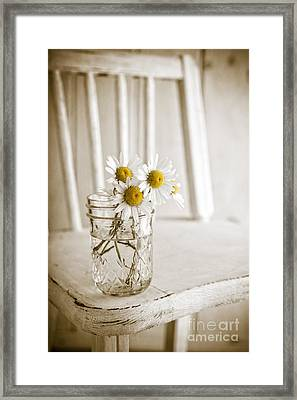 Simple White Daisy Flowers Framed Print