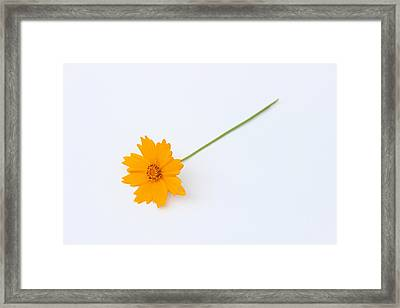 Framed Print featuring the photograph Simplicity by Ben Shields