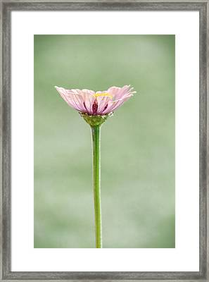 Framed Print featuring the photograph Simplicity In Pink  by Jeanne May