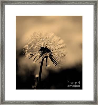Simplicity Framed Print by Julie Lueders