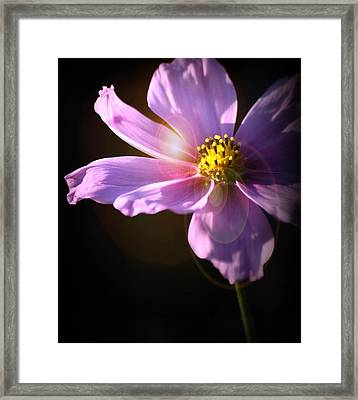 Simplicity Framed Print by Kerry Hauser