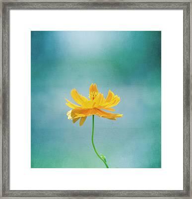 Simplicity Framed Print by Kim Hojnacki