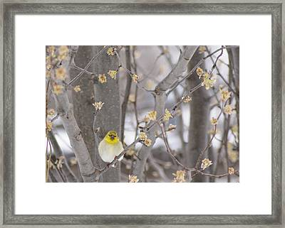 Simplicity Framed Print by Kimberly Danner