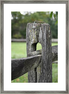 Simplicity Framed Print by Lisa Phillips
