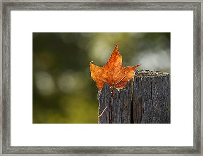 Simply Autumn Framed Print