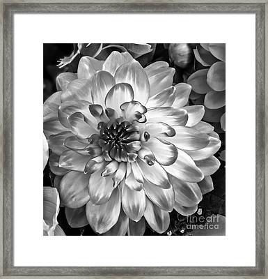 Simply Beautiful Framed Print by Arlene Carmel