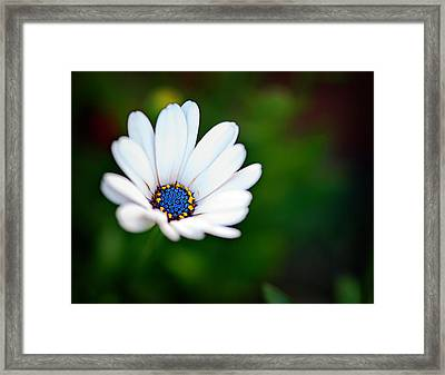 Simply Beautiful Framed Print by Tammy Smith