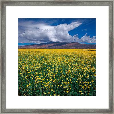 Framed Print featuring the photograph Simply Beautiful by Yue Wang
