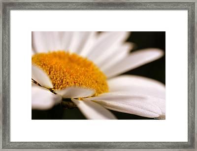 Simply Daisy Framed Print