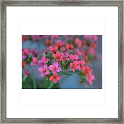 Simply Kalanchoe Framed Print