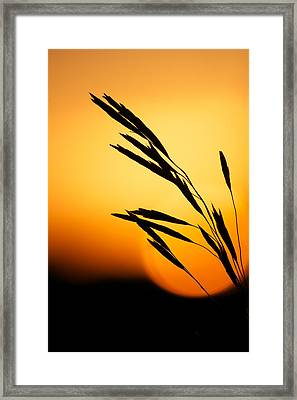 Simply Natural Framed Print