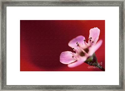 Simply Pretty Framed Print