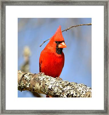 Simply Red Framed Print by Deena Stoddard
