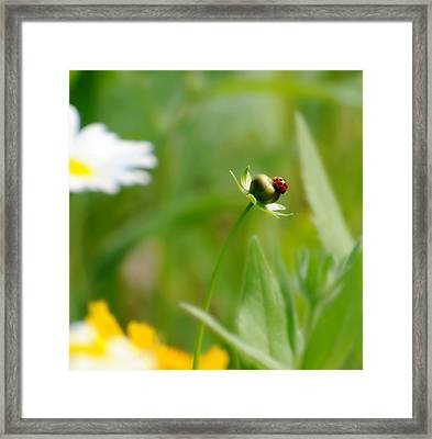 Simply Red Framed Print by Diana Angstadt