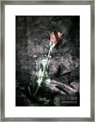 Simply Red Rose Framed Print