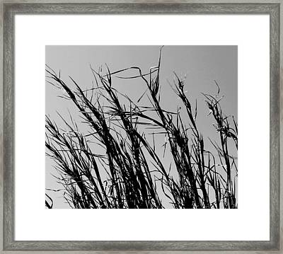 Framed Print featuring the photograph Simply Straw by Candice Trimble