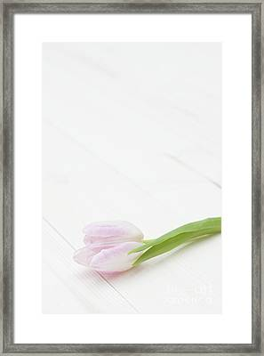Simply Tulip Framed Print by Anne Gilbert