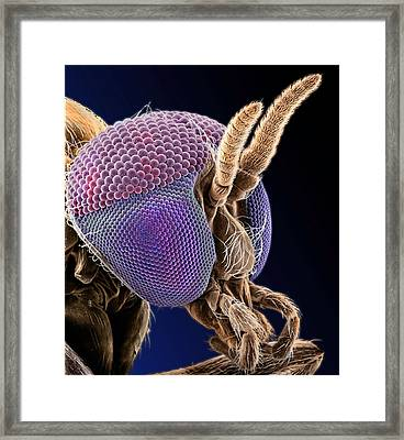 Simulian Blackfly Framed Print by Natural History Museum, London