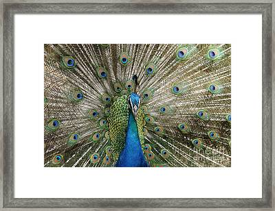 Sing To The Sanctified Framed Print by Sharon Mau