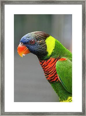 Singapore, Jurong Bird Park Framed Print by Cindy Miller Hopkins