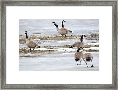 Framed Print featuring the photograph Singing A Tune by Dacia Doroff