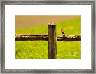Singing Bird Framed Print by George Paris
